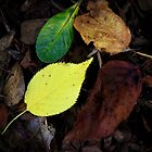 Collection of Leaves by Geoff Smith