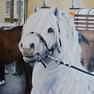 Little Stallion-Glin Fair by Pauline Sharp