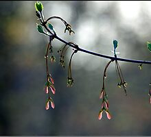Backlit Buds by Lauren Neely