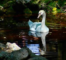 Reflections of a Swan by Julie Everhart