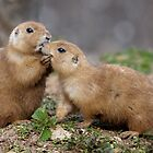 Kiss me Quick! (Black-Tailed Prairie Dogs) by Krys Bailey