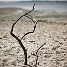 Driftwood by Joshdbaker