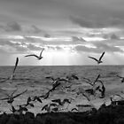 Sea b&amp;w 3922 by Joo Castro