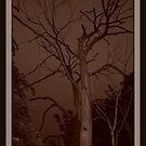 creepy tree by ruthmiller