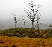 Foggy Morning near Ronny Creek,Tasmania, Australia. by kaysharp