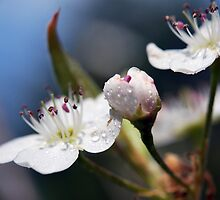 Spring Blossoms by Tracy Jones
