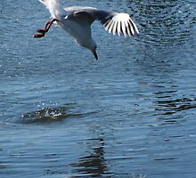 The Seagul, Lake King, Australia by liza1880