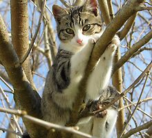 kitty in a tree by tomcat2170