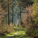 Strolling through the spring forest by jchanders