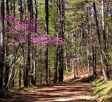 Red Buds on the Trail by Peggy Berger