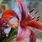 Lily with Layers by Mary Lake