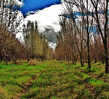 Apple Orchard on Old Hwy. 30 by trueblvr