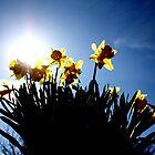 Host of Golden Daffodils by Lynn Ede