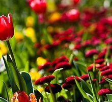 In Full Bloom by rebca
