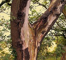 Split Trunk on Lightning Tree by Stan Owen