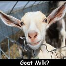 Goat Milk? by Anji Johnston