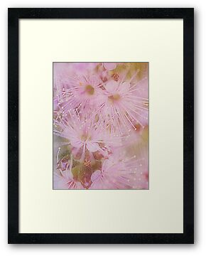 Shooting Stars..In Pink by Sharon House