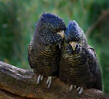 SNUGGLING COCKIES by Helen Akerstrom Photography