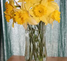 Daffodils in a Vase of Water by DebbieCHayes