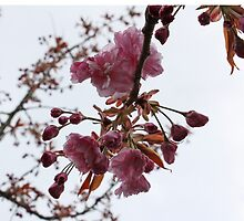 First Buds of Spring by Kelley Shannon