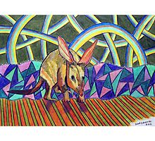 307 - BILBY - DAVE EDWARDS - COLOURED PENCILS - 2010 Photographic Print