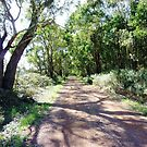 Country Road - South Purrumbete  by EdsMum