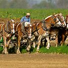 Amish Farming by Monte Morton
