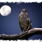 Bird of Prey by Elaine Game