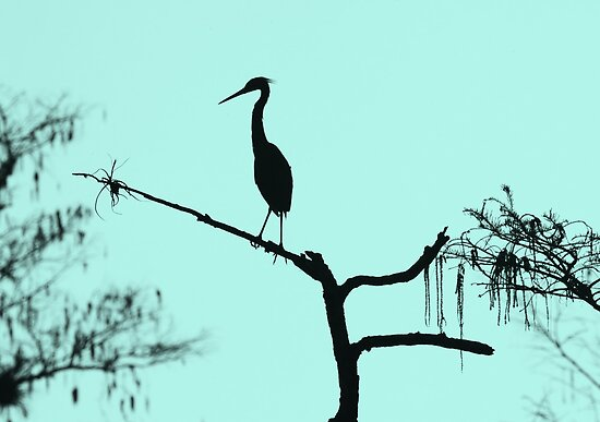 Morning Silhouette  by kathy s gillentine