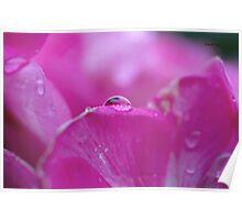 Droplet on petal Poster