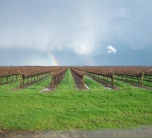 Nice Rainbow-California Delta by thechinadesk
