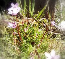 tiny pink wildflowers #2 by Dawna Morton