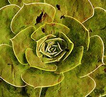 Succulent by Petra Höpfner