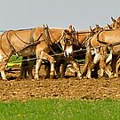Amish with Hydraulics  by Monte Morton