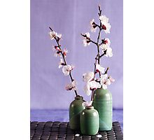 Blossoms and vases Photographic Print