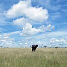 Calling the Herd by Laura Kelk