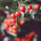 Rowan berries by Kasia Fiszer