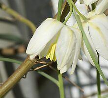 Snowwhite in Spring by walstraasart