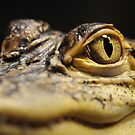 BABY CROCODILE by mc27