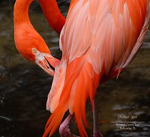 Flamingo Fire by Julie Everhart