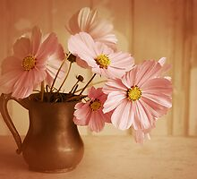 Vintage Cosmos by Colleen Farrell