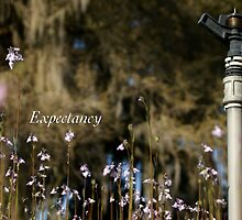 Expectancy by JpPhotos