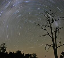 Star Trails - Blue-dog, Boonah by Saneel Vasram