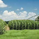 Corn Rows by Stacey Lynn Payne