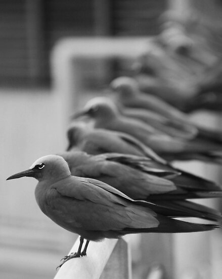 Birds of a Feather Flock Together by Lisa Baumeler