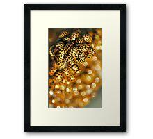 Ladybird Massing. Framed Print