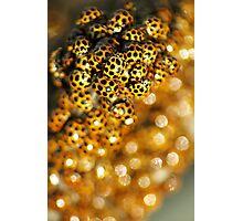 Ladybird Massing. Photographic Print