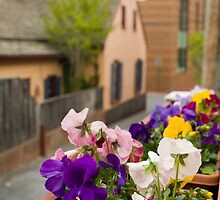 Springtime in the City by Mark Van Scyoc