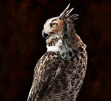 Owl by Gouzelka
