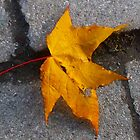 Autumn Leaf close up by imagio